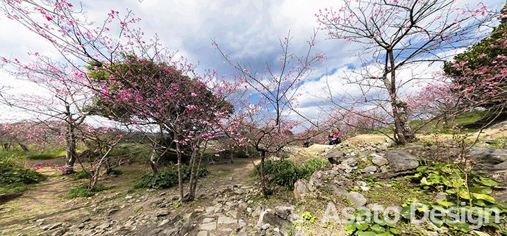 今帰仁村・今帰仁城跡の桜の360度パノラマ写真