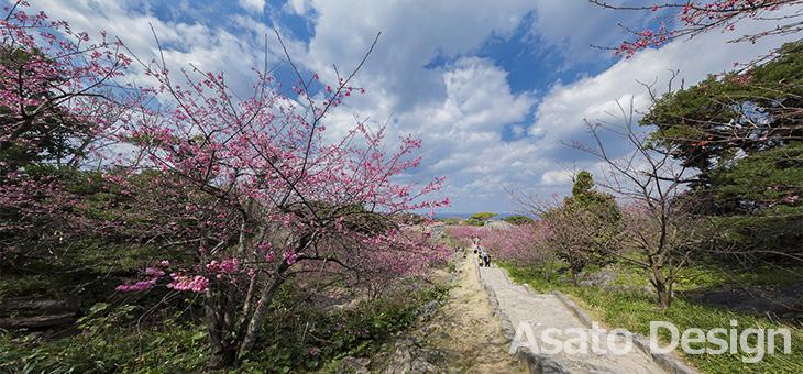 今帰仁村・今帰仁城跡の桜2の360度パノラマ写真